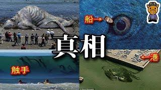 超巨大海洋生物たちの真相 thumbnail