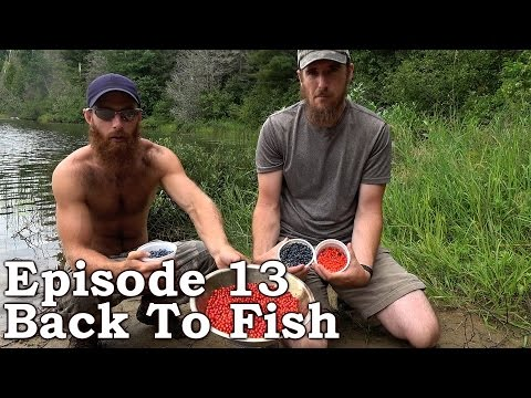 Catch n Cook CLAMS | The Wilderness Living Challenge 2016 S01E13 - BACK TO FISH