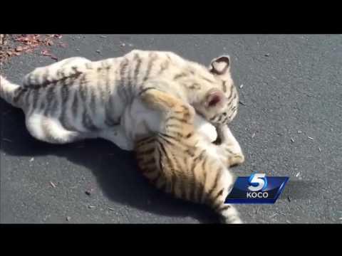 Animal Welfare investigates 'Neon Jungle' at Oklahoma City mall