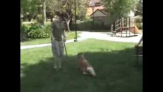 Trained Dogs For Sale Los Angeles California