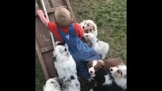 💗Aww - Funny and Cute Animals Compilation 2019💗 #21WW - Cute dogs videos funny 💗 #15