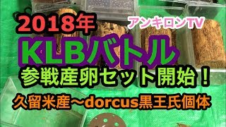 2018年 久留米産KLB参戦産卵セット開始!