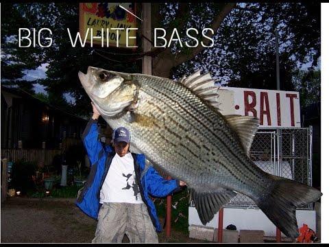 Striper And White Bassin At The Livingston Dam!