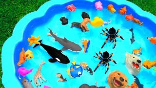 Learn Colors Wild Animal and Sea Animal Names For Kids | Colors For Kids Surprise Toys