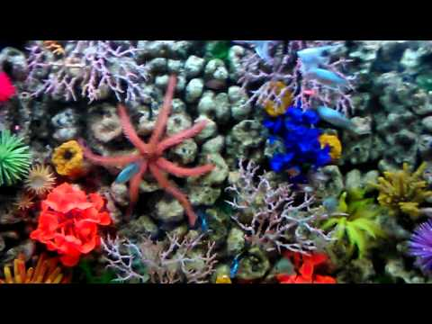 Самодельный фильтр для аквариума через месяц работ