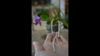 Хелат железа. Хлороз растений. Стимуляторы для орхидей
