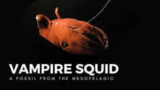 The Vampire Squid, a Living Fossil of the Abyss