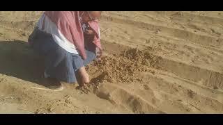 انواع التربة بأرض الفرافرة بشركة الفلاح أسامة الفار ت 01008791285