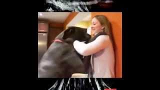 Собака и девушка зажигают! жесть(Dog and girl dance)
