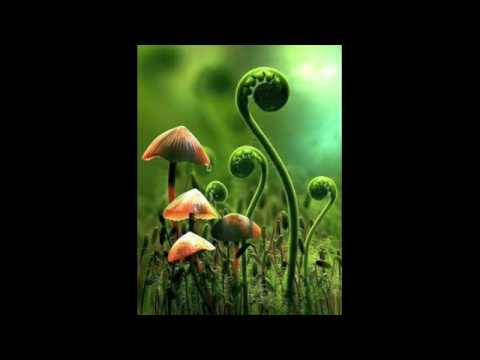 Mushrooms Justin Martin Remix  Marshall Jefferson