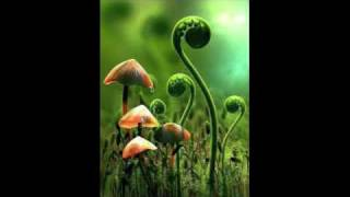 Play Mushrooms (Salt City Orchestra Out There mix)