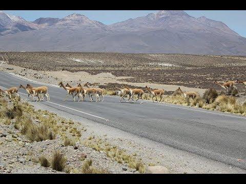 #7 Арекипа, Альтиплано - обширное плато в Андах испещрённое вулканами, Чивай (Перу)