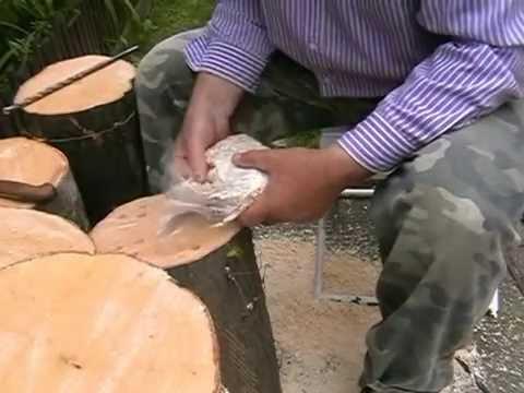 9c9ccae0a Hliva ustricová - pestovanie na dreve - YouTube