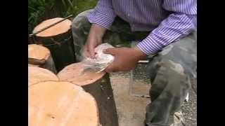 Hliva ustricová -  pestovanie na dreve(Pestovanie hlivy ustricovej na dreve v amatérskych podmienkach.Spôsob prípravy dreva a uloženie sadby do dreva., 2015-02-26T20:25:56.000Z)