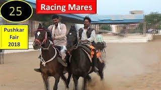 Pushkar Mela : Indian Kathiyawadi Racing Horse For Sale : घोडा रेस  Ghode Ki Race