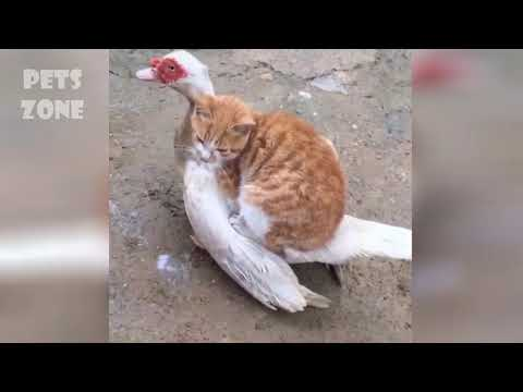 Cute dogs and cats 2019 ✪ Best Funny Pet Videos 2