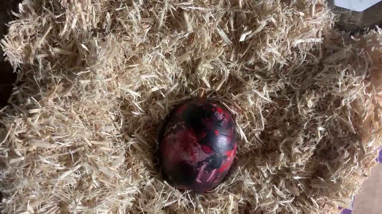 Download THE MONGOLIAN DEATH WORM EGG #THEEGG #THEDEATHWORM #MONGOLIANDEATHWORM