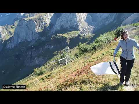 Watch scientists catch migrating insects in the Alps   Science News