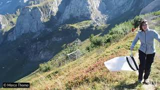 Watch scientists catch migrating insects in the Alps | Science News