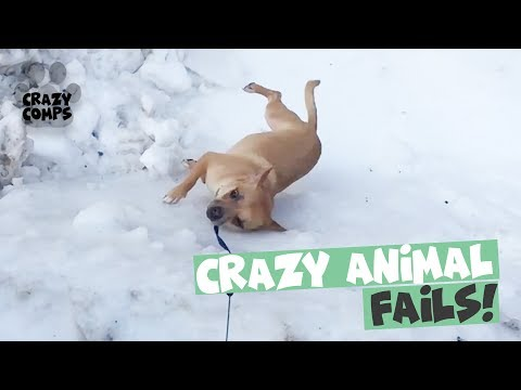Funny Animal Fail Compilation 2018 – Animals Falling Over 😂😂😂