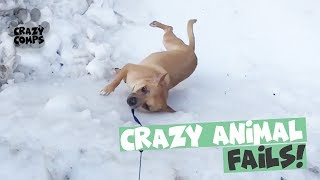 Funny Animal Fail Compilation 2018 - Animals Falling Over 😂😂😂