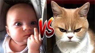 Funny Cat VS Baby in the world Compilation #1