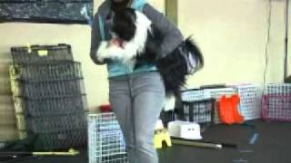 Canine Freestyle - T.a.p. Dancing For Success By Julie Flanery