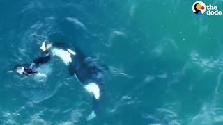 Kayaker Jumps In Water To Swim With Orca