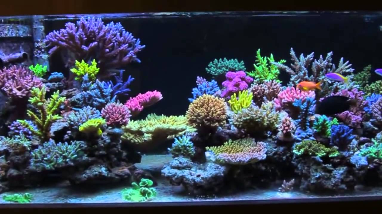 reef interests all in one biopellets on sps aquarium   youtube