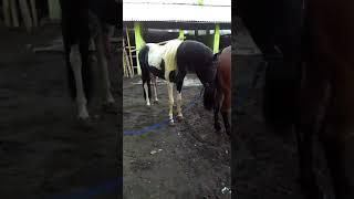 Download Video Buka perawan kuda MP3 3GP MP4