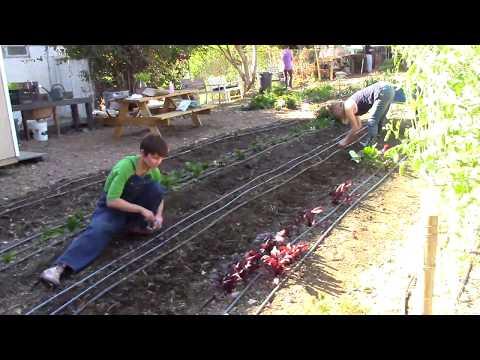The Orange Home Grown Education Farm