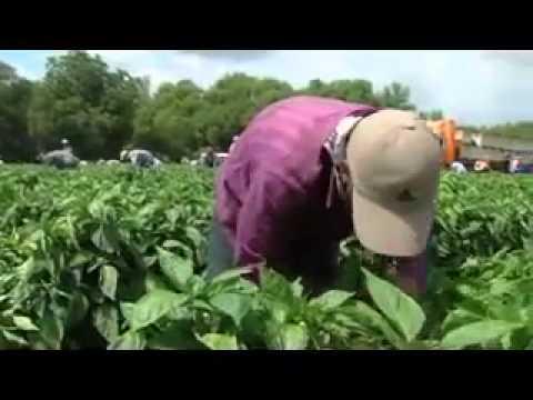 Agriculture Recruitment Services