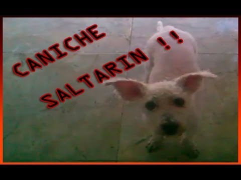 JJ tu cachorro saltarín from YouTube · Duration:  21 seconds