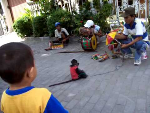 The best Monkey street attraction TOPENG MONYET