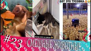 СМЕШНЫЕ ЖИВОТНЫЕ СМЕШНЫЕ КОШКИ 2021 И ДРУГИЕ ЖИВОТНЫЕ 10 МИНУТ СМЕХА приколы2021 коты собаки