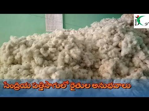 Organic cotton cultivation-Farmer's Experiences, kharif 2017/ సేంద్రీయ పత్తి సాగులో రైతుల అనుభవాలు