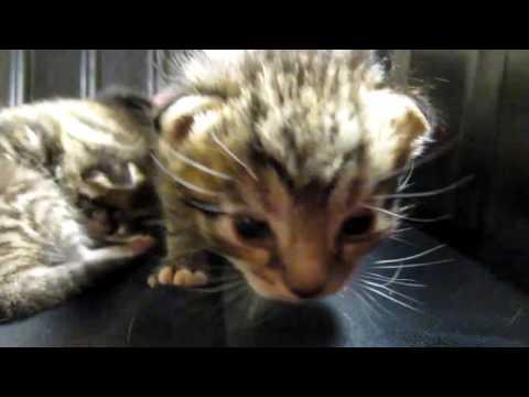 Cat litter and Newborn Kittens! --- CAT COMPILATION