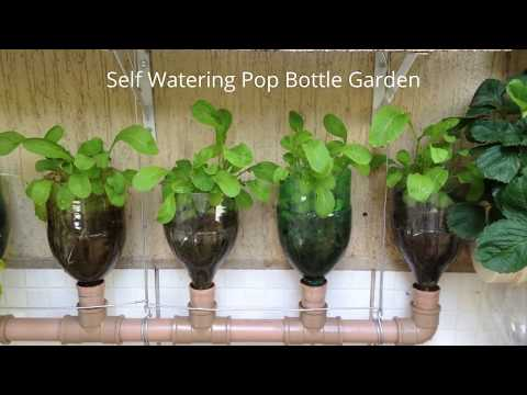Bottle Garden The Incredible Self Watering Pop Grow System!