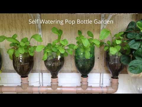 download Bottle Garden The Incredible Self Watering Pop Grow System!