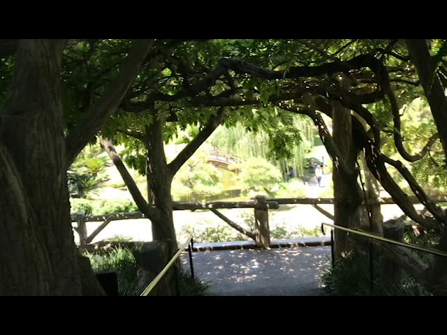 A Tour of the Japanese Garden at the Huntington