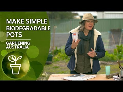 How To Make Simple Biodegradable Pots With Newspaper