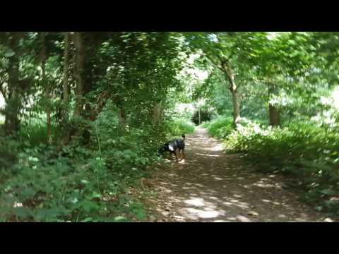 Putney Heath