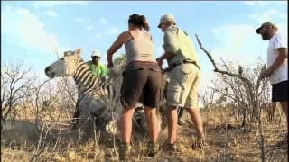 J'ai marche? sur la terre, Zimbabwe - Teaser