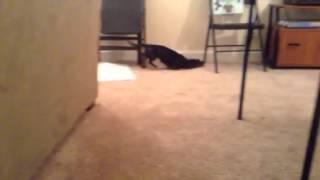 Bath time for dachshund puppy!