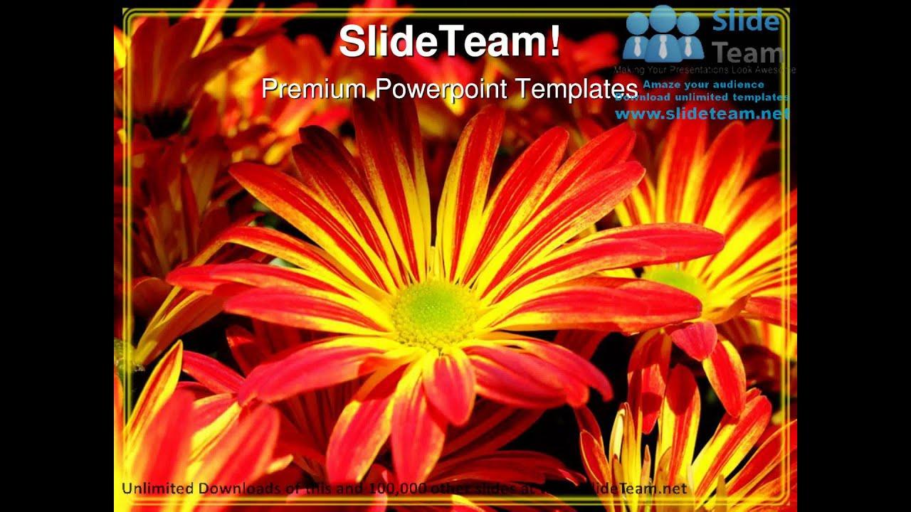 Yellow red daisy flower beauty powerpoint templates themes and yellow red daisy flower beauty powerpoint templates themes and backgrounds ppt themes youtube izmirmasajfo