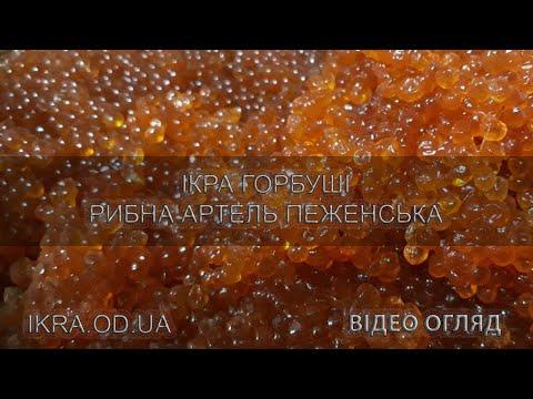 Икра горбуши Рыбная Артель Пеженская - видео обзор качества продукта - купить оптом и в розницу