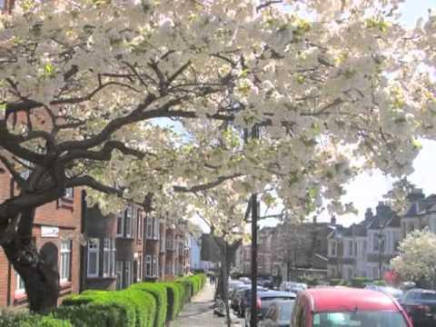 Snapshots of West Hampstead by Edward Petherbridge