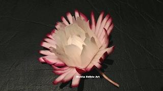 Red Radish Pikul Thai Flower - Beginners Lesson 29 By Mutita Art Of Fruit And Vegetable Carving