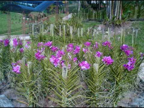 Orchid Garden.wmv