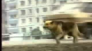 Собака ждала хозяина 8 лет Русский Хатико(, 2014-06-06T09:49:06.000Z)